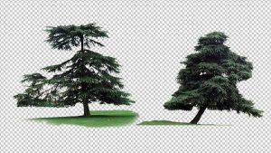 دانلود عکس درخت برای مت پینتینگ – Picture Tree Png