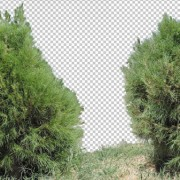 5 Photos Plant Png