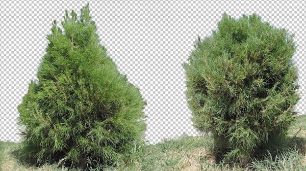 5 Photos Plant Png