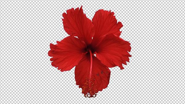 تکسچر گل قرمز – Texture Red Flower