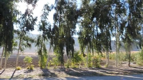 ویدیوی درخت در جاده – Video Tree On The Road