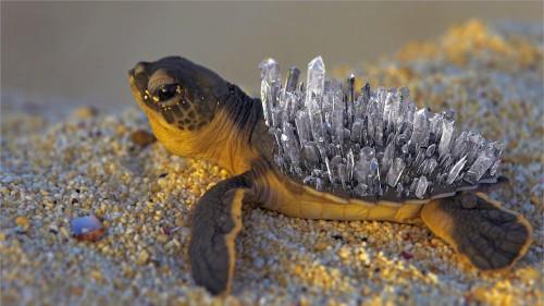 create-crystal-in-turtle-cinema-4d-r18
