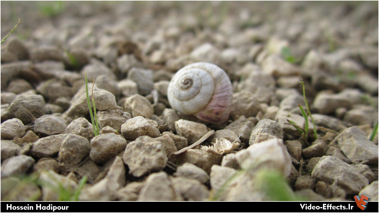 حلزون بر روی سنگ ها