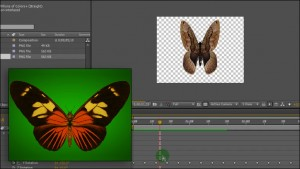Animated butterfly In After Effects